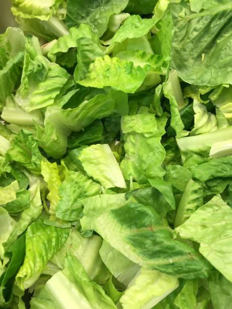 chopped romaine lettuce - lettuce stock photos and pictures