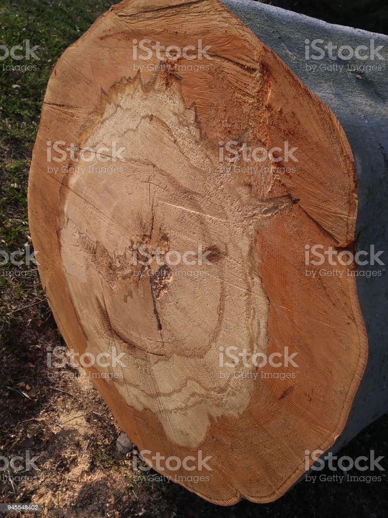 Chopped Tree Stump stock photo
