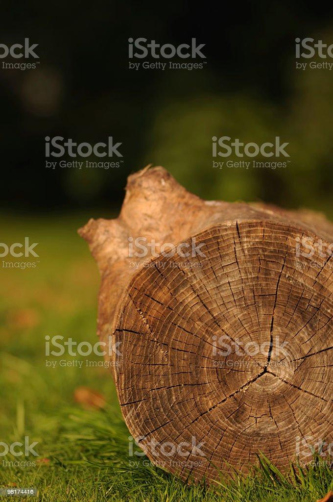 Chopped Tree Trunk royalty-free stock photo