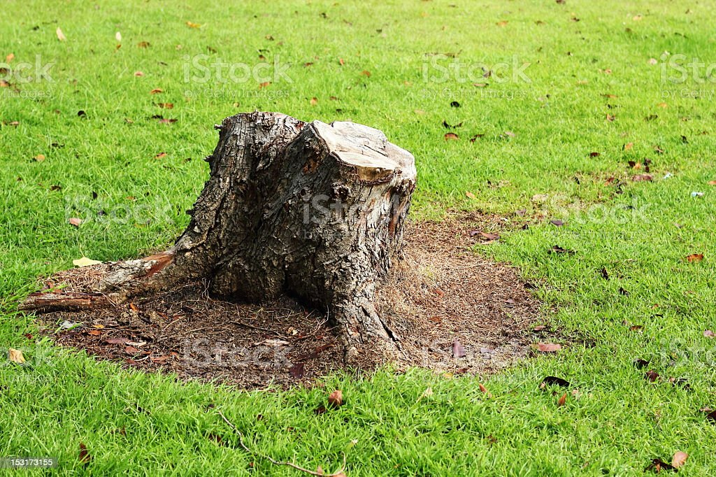 A chopped tree with just a stump left stock photo