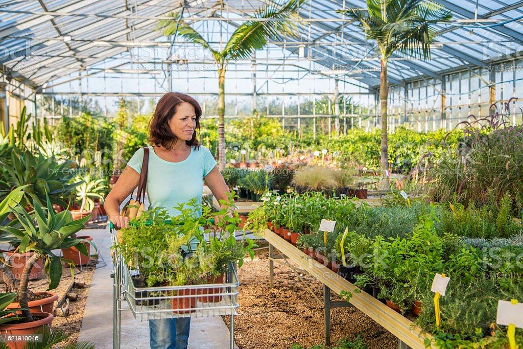 Chosing plants in Garden Centre stock photo