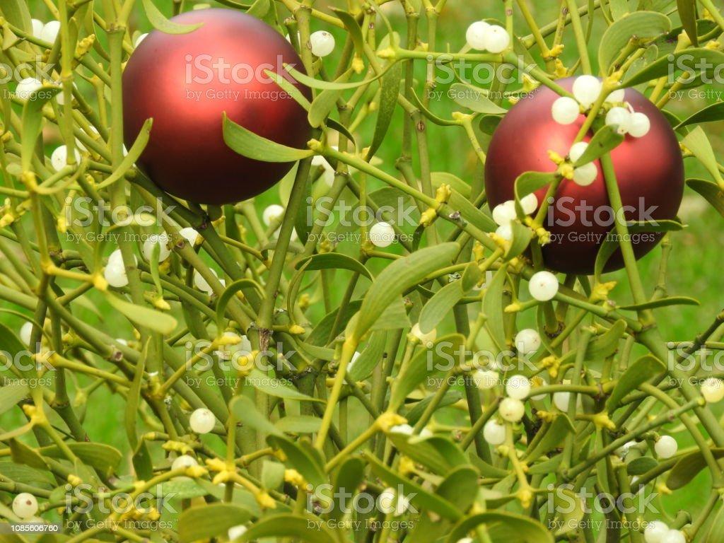 December Christmas holiday greeting card. Kisses under the mistletoe,...