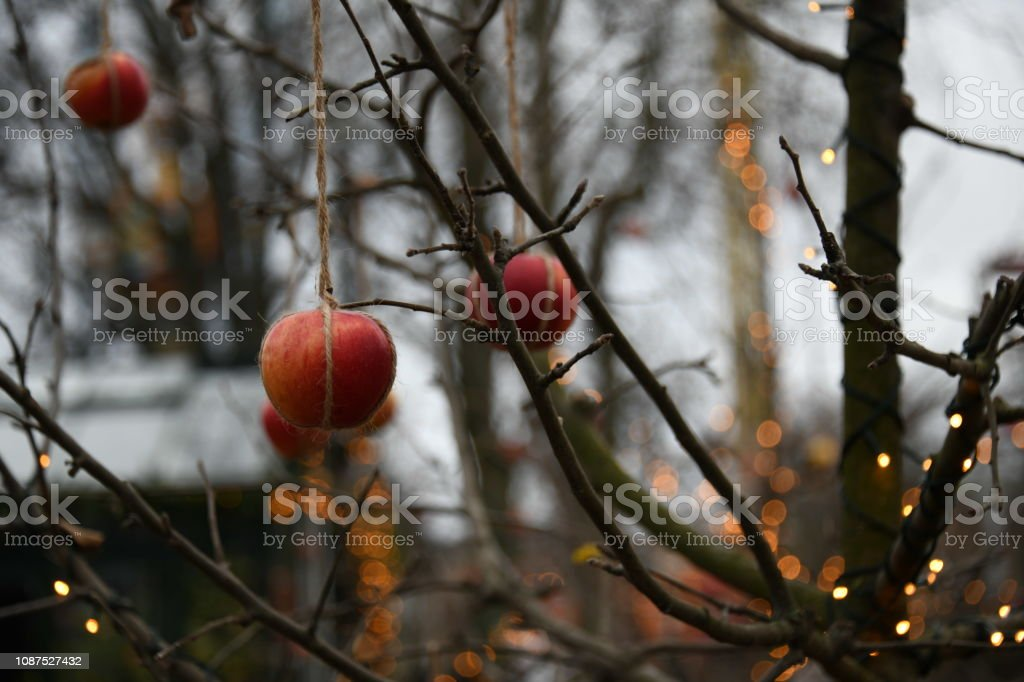 Christmas apples hung in a tree in Denmark stock photo
