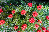 istock Christmas arrangement of green leaves and red berries 1193592394
