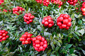 istock Christmas arrangement of green leaves and red berries 1193592417