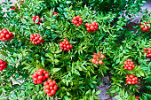 istock Christmas arrangement of green leaves and red berries 1193592445