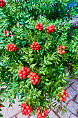 istock Christmas arrangement of green leaves and red berries 1193592536