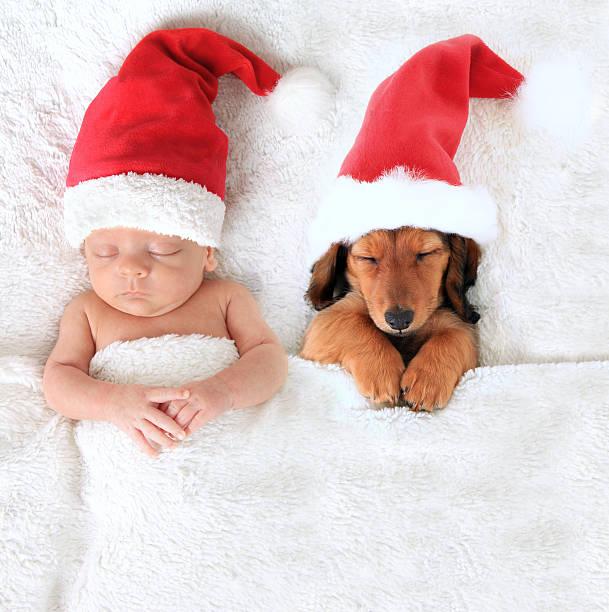 bébé et le chiot de noël santa - canidés photos et images de collection