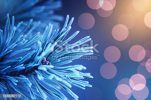 Christmas background. Christmas and New Year card. Pine branch on blue background with bokeh.