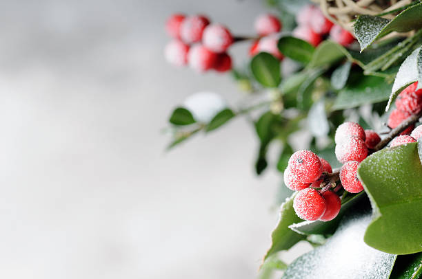 weihnachten hintergrund - stechpalme stock-fotos und bilder