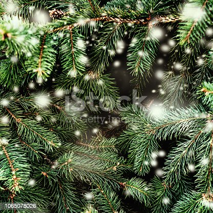 istock Christmas Background with falling white  snow and fir tree branches. Merry Christmas Festive Card. Copy space. 1065078026