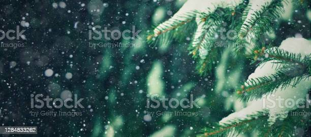 Photo of Christmas Background with Fresh Fir Tree and Falling Snow