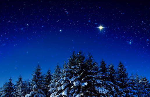 Christmas background with stars and trees in winter forest.