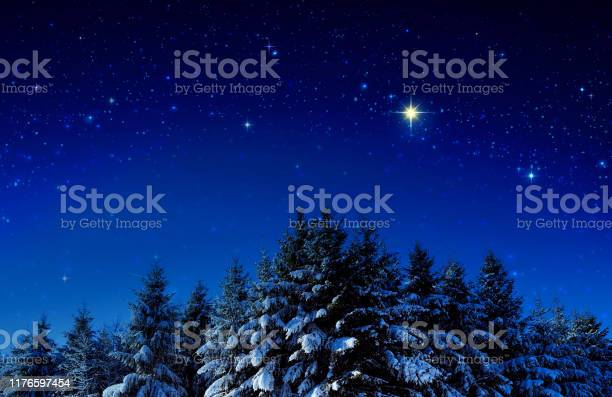Christmas background with stars and trees in winter forest picture id1176597454?b=1&k=6&m=1176597454&s=612x612&h=p2qqnyvgpvmt3aptua6anhvdpccoimjrcsvtkoye9ug=