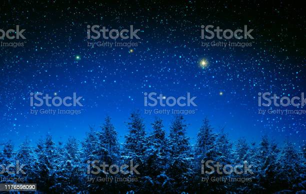 Photo of Christmas background with stars and trees in winter forest.