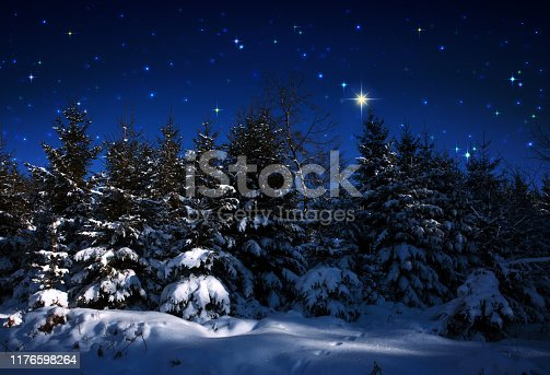 Winter forest with snow covered fir trees and stars sky .