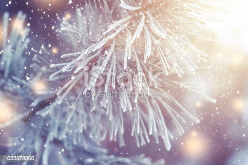 614958148 istock photo Christmas background. Xmas theme. Christmas tree branch with hoarfrost closeup and festive lights with shining snowflakes. New year. Pine branch in frost. Winter nature plants in december. 1033678066