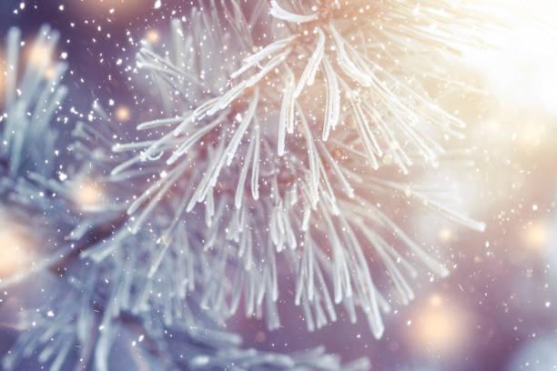 Christmas background xmas theme christmas tree branch with hoarfrost picture id1033678066?b=1&k=6&m=1033678066&s=612x612&w=0&h=sdiewpkpe30qge8g9u saelpraoxltqvemqvkamrqls=