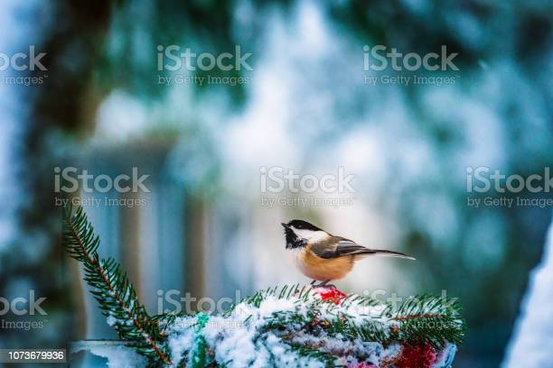 Photo of Christmas bird,