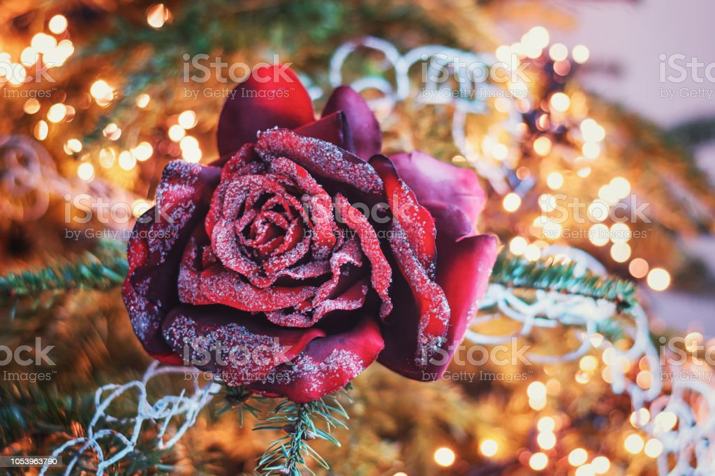 Christmas branch decorated with a red Christmas rose.