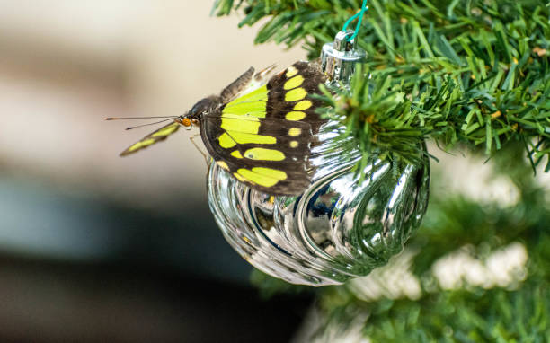 Christmas butterfly stock photo
