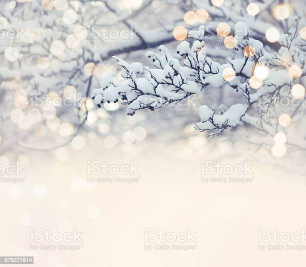Photo of Christmas card, branch in snow