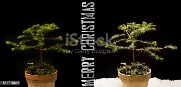 875265254 istock photo Christmas card – Little Pine tree after snowing 874716818