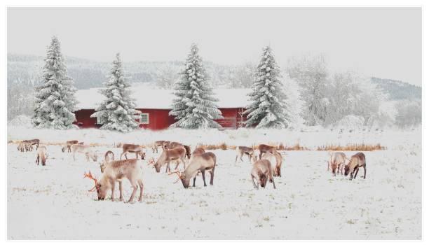 julkort - norrbotten bildbanksfoton och bilder