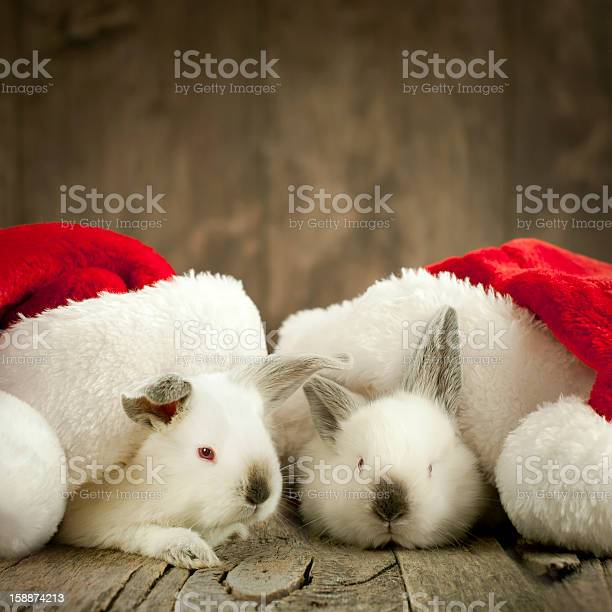 Christmas card with two white rabbit under caps picture id158874213?b=1&k=6&m=158874213&s=612x612&h=9a jsiz2hulmot8yv3ekwgxg3e2u1ucqelm6byxc0z8=