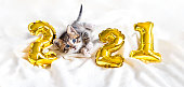 istock Christmas cat 2021. Kitty with gold foil balloons number 2021 new year. Striped kitten on Christmas festive white background 1285408530