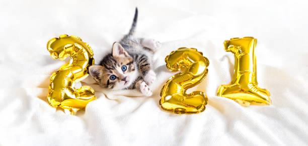 gato de navidad 2021. kitty con globos de oro número 2021 año nuevo. gatito de rayas sobre fondo blanco festivo navideño - dog fotografías e imágenes de stock