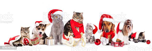 Christmas cat and dog picture id526262569?b=1&k=6&m=526262569&s=612x612&h=0xdqo4cpuvenhut1n80p4brn5z2htulj5sh90d7e2hi=