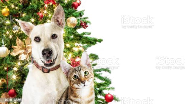 Christmas cat and dog white web banner picture id1191913586?b=1&k=6&m=1191913586&s=612x612&h=i0icop8gwswn3abf6xasut2b nkld9zenhozi3cviwk=