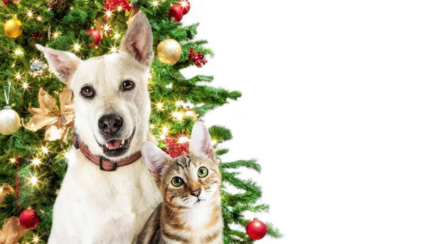 Christmas Cat and Dog White Web Banner stock photo