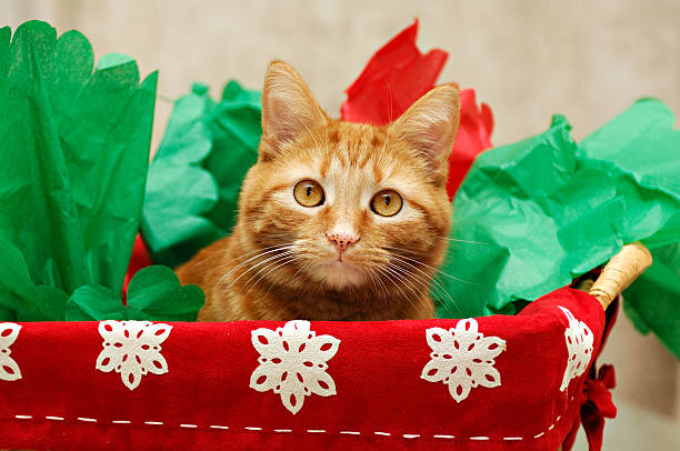 Christmas Cat in a Basket stock photo