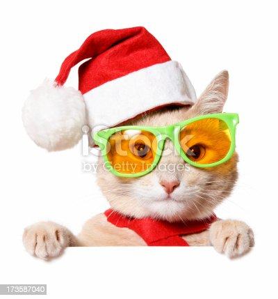 istock Christmas Cat (blank sign) 173587040