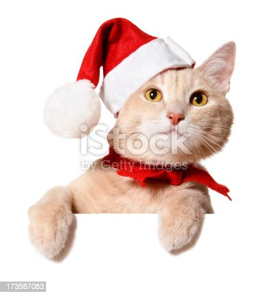istock Christmas Cat (blank sign) 173587083