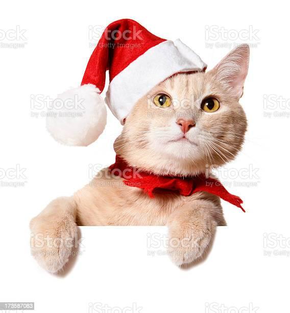 Christmas cat picture id173587083?b=1&k=6&m=173587083&s=612x612&h=obqbr2yhl8pldxoiamkb0cmbfahjsgvnkqi0j2svsr8=