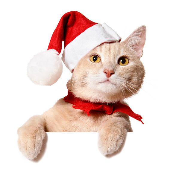 Christmas cat picture id173587083?b=1&k=6&m=173587083&s=612x612&w=0&h=uzm1zt6s8cetweummdgh6rmkwbiafkxlw7ring0q2mw=