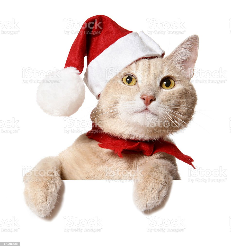 Christmas Cat (blank sign) stock photo
