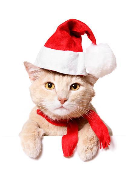 Christmas cat picture id173623467?b=1&k=6&m=173623467&s=612x612&w=0&h=usdwgi79jxrq 1airp bxbzzleanoxlulzmukih1tge=