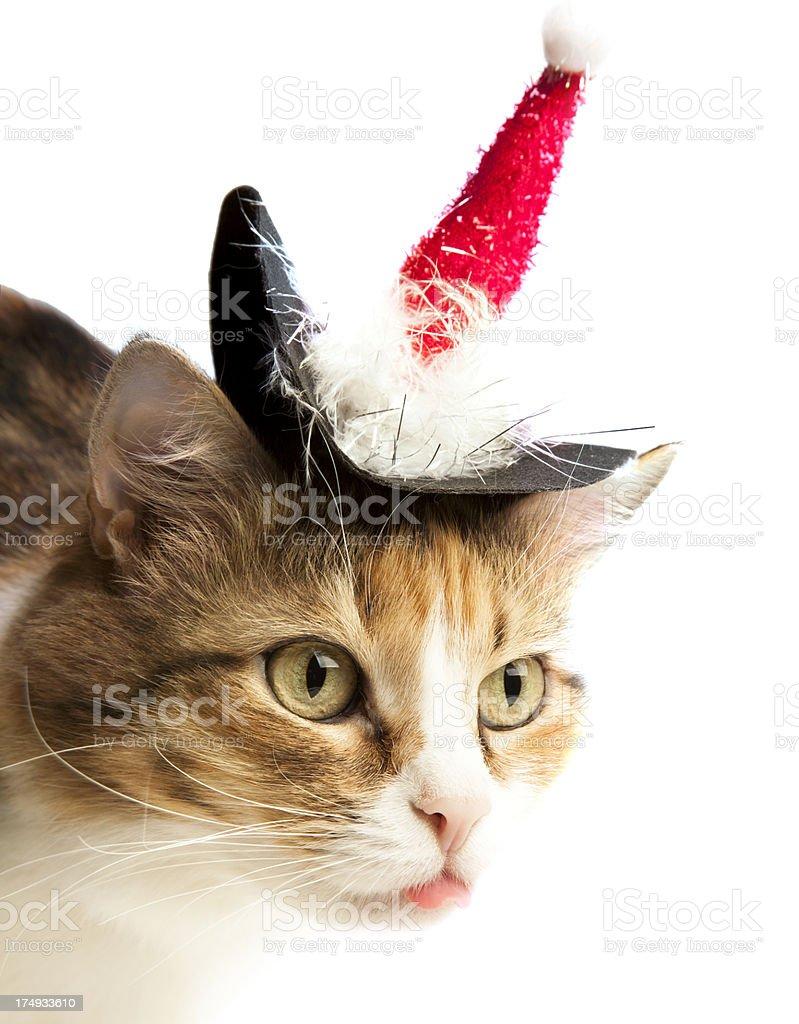Christmas cat. royalty-free stock photo