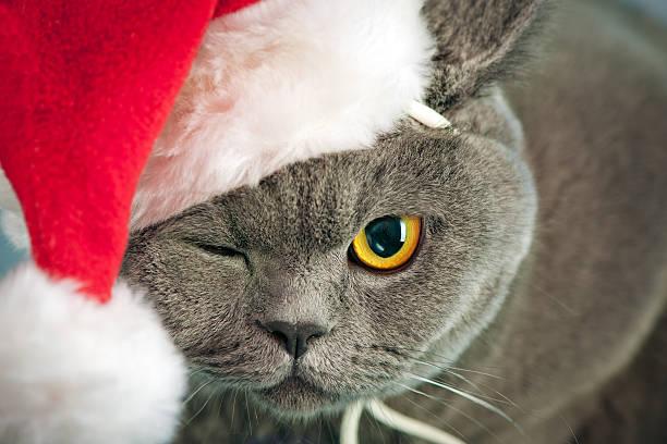 Christmas cat picture id175596497?b=1&k=6&m=175596497&s=612x612&w=0&h=h3ggubmhtrqst91a 4xih640j q soqmo68x2cnrhvy=