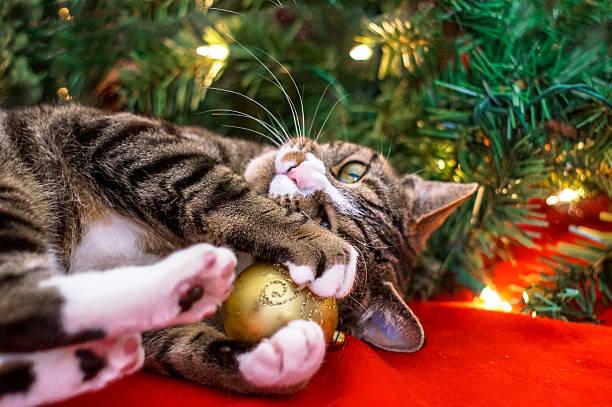 weihnachten katze - katze weihnachten stock-fotos und bilder