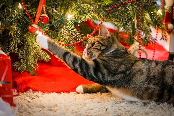 Christmas cat picture id459133769?b=1&k=6&m=459133769&s=612x612&w=0&h=l tcodh57o4vg2nuqxjrhoorgqnehzckyqmjtvsbneq=