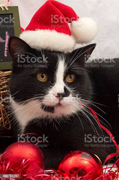 Christmas cat picture id469734297?b=1&k=6&m=469734297&s=612x612&h=ojlweq3fbscom4 wves7scawhky8808jlvuhjewh5h0=