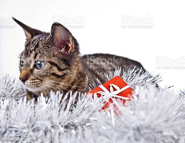 Christmas cat picture id627046230?b=1&k=6&m=627046230&s=612x612&h=q9jxgdzzbts91tadoo5deuoxcowtajhpjkvtopd4qwu=