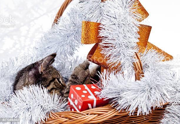 Christmas cat picture id627049342?b=1&k=6&m=627049342&s=612x612&h=kysjfsuhsnofazgq57vcyfeklxpuafw1alpavp6hqeg=
