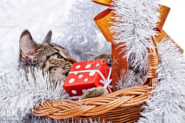 Christmas cat picture id627049382?b=1&k=6&m=627049382&s=612x612&h=x3xssko 03bympjq2ayycunijzsa 4ryargknrsufv4=