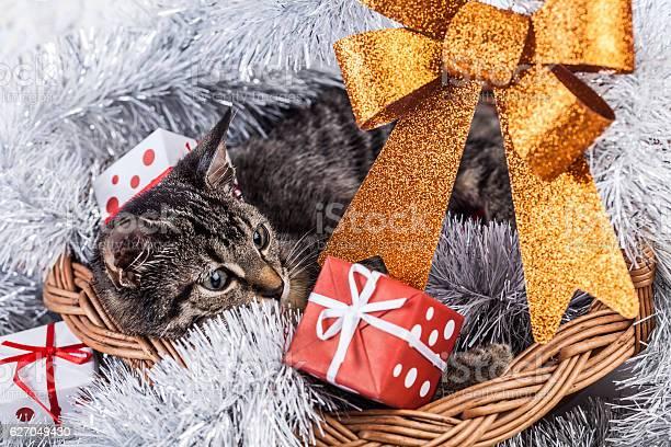 Christmas cat picture id627049430?b=1&k=6&m=627049430&s=612x612&h=zelu5lrh zsbmri7gtzh8bj6hmp8naevuwaxd7 j5ru=